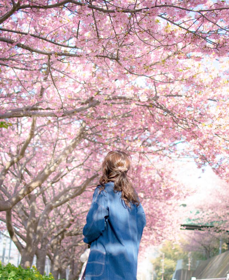 春は出会いの季節、山に桜咲き、心に春が訪れる